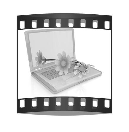 cosmos flower on laptop on a white background. The film strip Reklamní fotografie