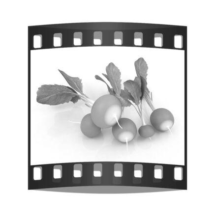 small garden: Small garden radish on a white background. The film strip Stock Photo
