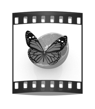 butterflys: Red butterflys on a half oranges on a white background. The film strip