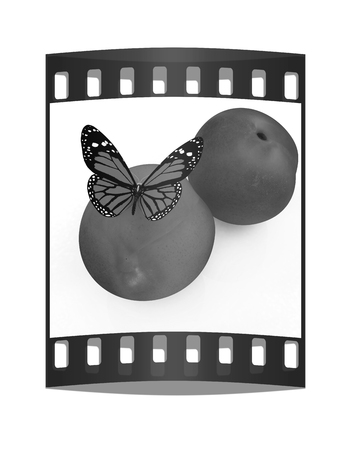 butterflys: Red butterflys on a fresh peaches on a white background. The film strip