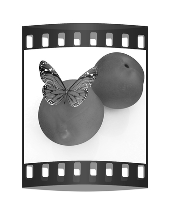 butterflys: Blue butterflys on a fresh peaches on a white background. The film strip