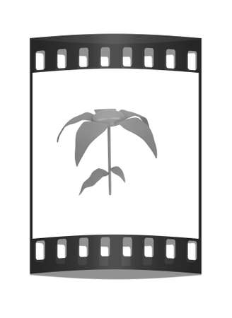 potting soil: Flower icon on a white background. The film strip