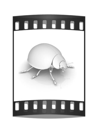 metall: Metall beetle on a white background. The film strip Stock Photo