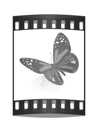 colorful butterfly: colorful butterfly. The film strip