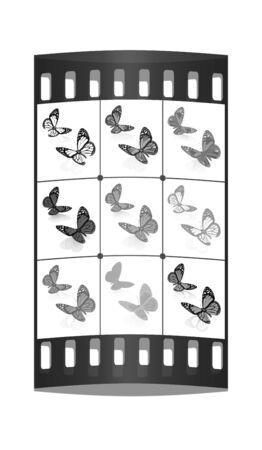 botanika: Motýli botanika set. Filmový pás