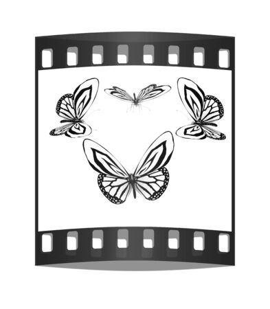 fancy: fancy butterflies. The film strip