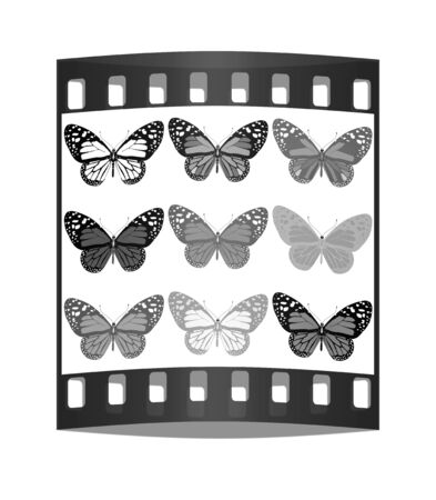 peacock butterfly: Butterflies botany set. The film strip Stock Photo