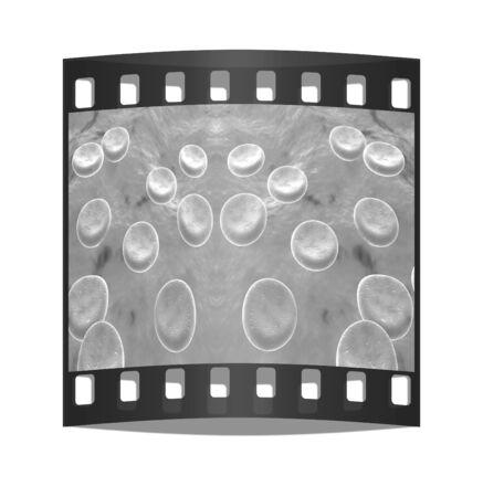microcosmic: Blood cells. The film strip Stock Photo