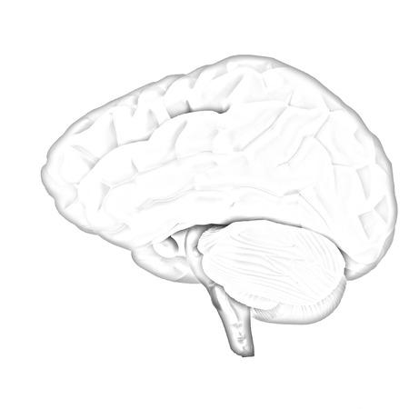 mentality: Colorfull human brain Stock Photo