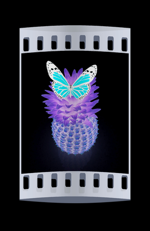 butterflys: butterflys on a pineapple on a black background. The film strip