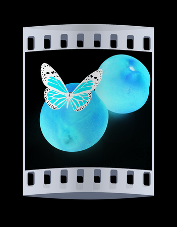 butterflys: butterflys on a fresh peaches on a black background. The film strip