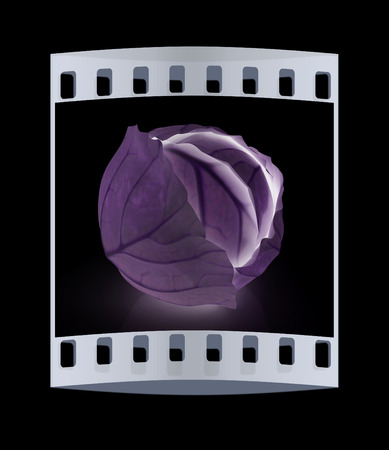 Green cabbage on a black background. The film strip Stock Photo