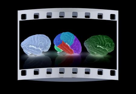sensory: Human brains. The film strip