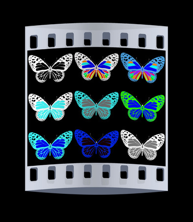 admiral: Butterflies botany set. The film strip Stock Photo