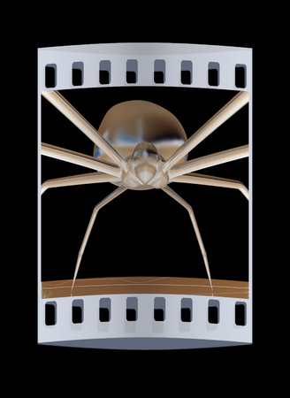 crawly: chrome spider.Close-up on a black background. The film strip Stock Photo