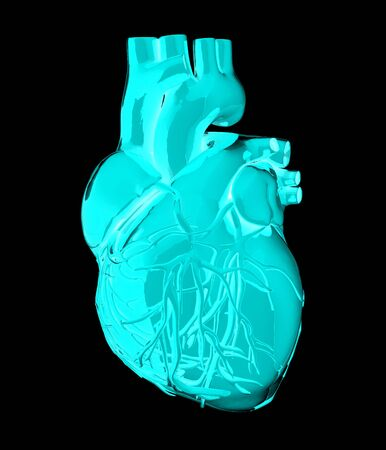 left ventricle: Human heart