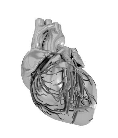 vein valve: Human heart