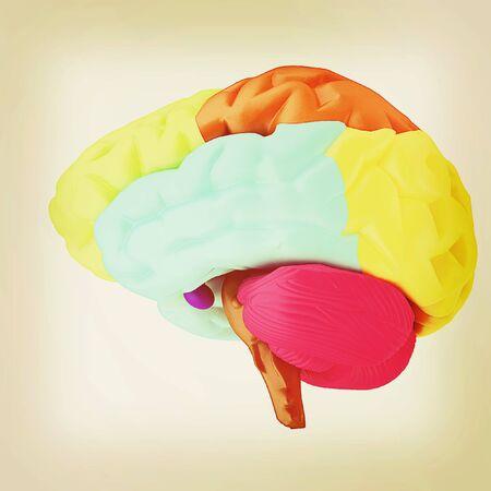 sensory: Colorfull human brain. 3D illustration. Vintage style.