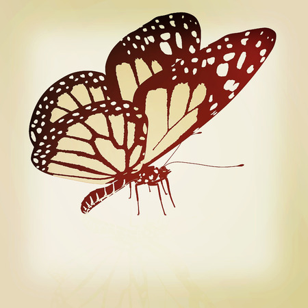 antennae: Black and white beautiful butterfly. High quality rendering. 3D illustration. Vintage style. Stock Photo