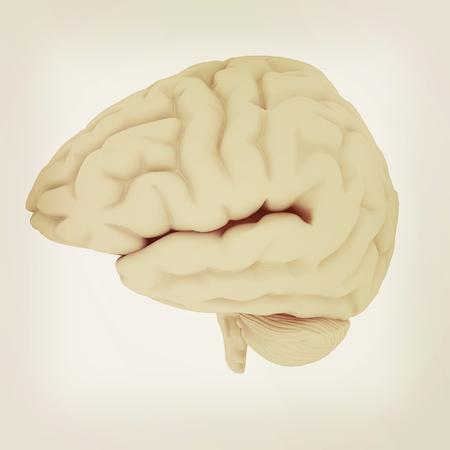 mentality: Human brain. 3D illustration. Vintage style. Stock Photo