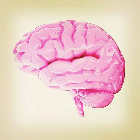 Human brain. 3D illustration. Vintage style. Stock Photo