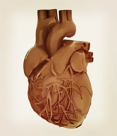 right atrium: Human heart. 3D illustration. Vintage style.