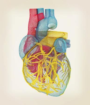 left ventricle: Human heart. 3D illustration. Vintage style.