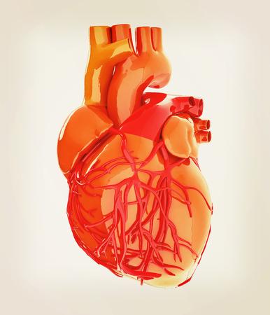 vein valve: Human heart. 3D illustration. Vintage style.