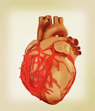 right coronary artery: Human heart. 3D illustration. Vintage style.