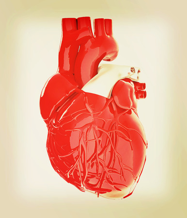 right ventricle: Human heart. 3D illustration. Vintage style.
