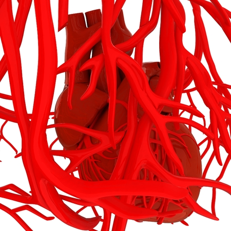 right ventricle: Human heart and veins. 3D illustration.