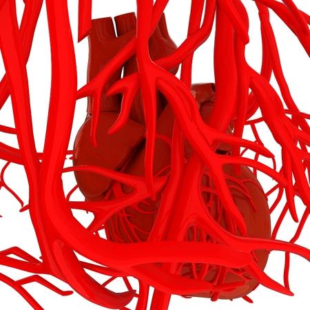 veins: Human heart and veins. 3D illustration.