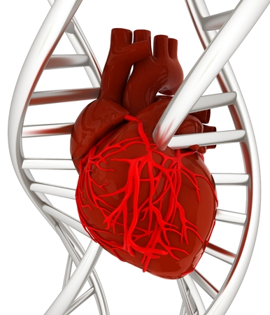 clone: DNA and heart. 3d illustration
