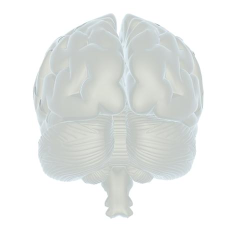 3D illustration of human brain