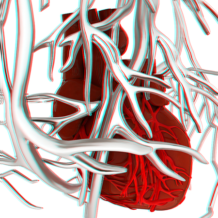 Human heart and veins. 3D illustration.. Anaglyph. View with redcyan glasses to see in 3D.