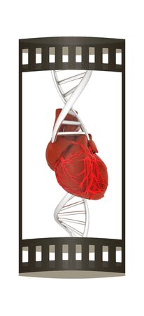 strip structure: DNA and heart. 3d illustration. The film strip