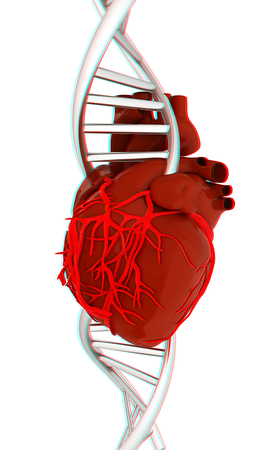 vascular: DNA and heart. 3d illustration. Anaglyph. View with redcyan glasses to see in 3D. Stock Photo