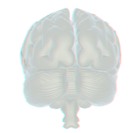 percepción: 3D illustration of human brain. Anaglyph. View with redcyan glasses to see in 3D. Foto de archivo