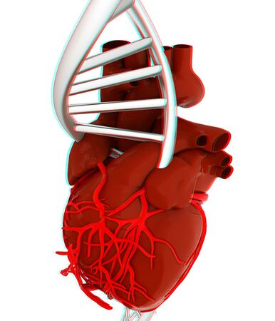 DNA and heart. 3d illustration. Anaglyph. View with redcyan glasses to see in 3D. Stock Photo