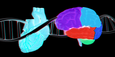 DNA, brain and heart. 3d illustration. Anaglyph. View with redcyan glasses to see in 3D. Stock Photo