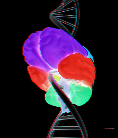 Brain and dna. 3d illustration. Anaglyph. View with redcyan glasses to see in 3D.