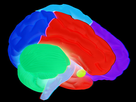 creative concept with 3d rendered colourful brain. Anaglyph. View with redcyan glasses to see in 3D.
