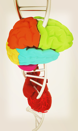 DNA, brain and heart. 3d illustration Stock Photo
