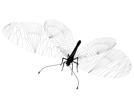 animal silhouette: line butterfly. 3d illustration Stock Photo