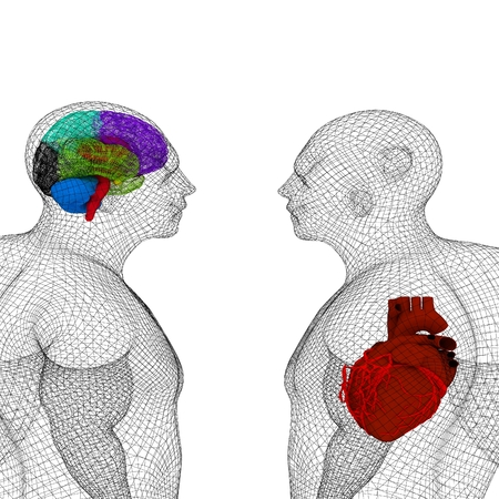 Wire human body model with heart and brain in x-ray. 3d render