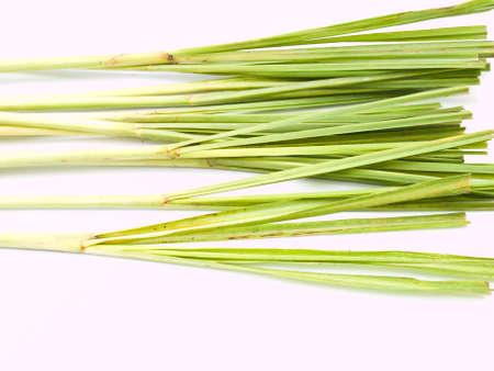 lemongrass: Fresh Lemongrass Stock Photo