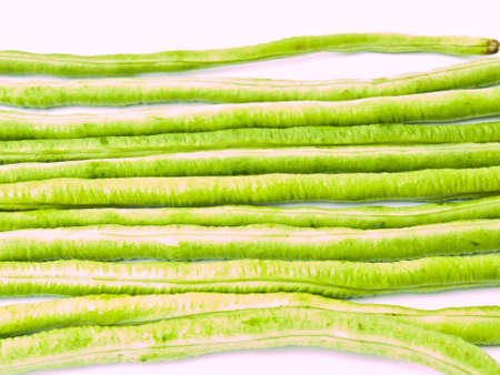 Yardlong bean, Vigna unguiculata subsp. sesquipedalis, isolated on white background photo