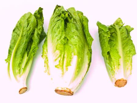 Fresh cos salad isolated on white background