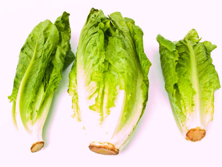 cos: Fresh cos salad isolated on white background
