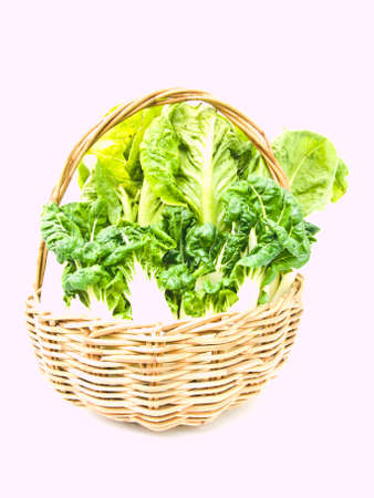 Fresh  baby bok choy and cos salad in ratten basket isolated on white background Stock Photo - 17840430